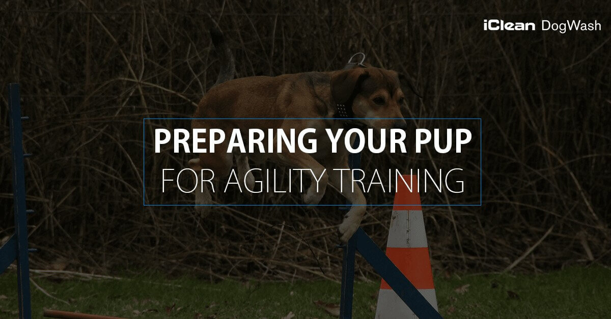 Pup Agility Training