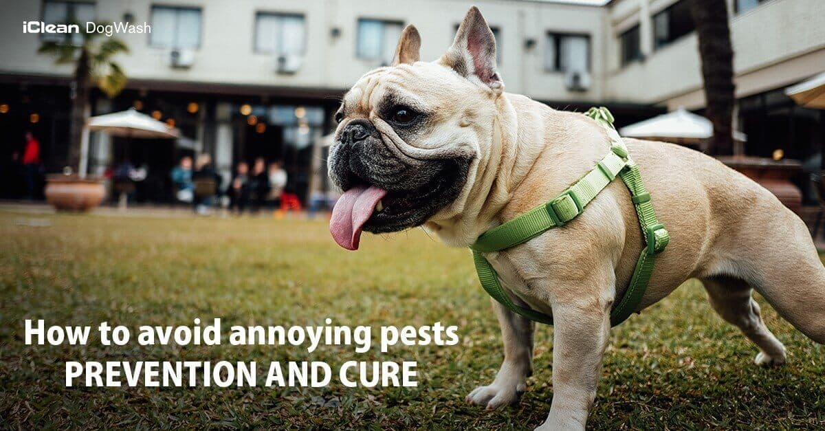 avoid annoying pests: prevention and cure