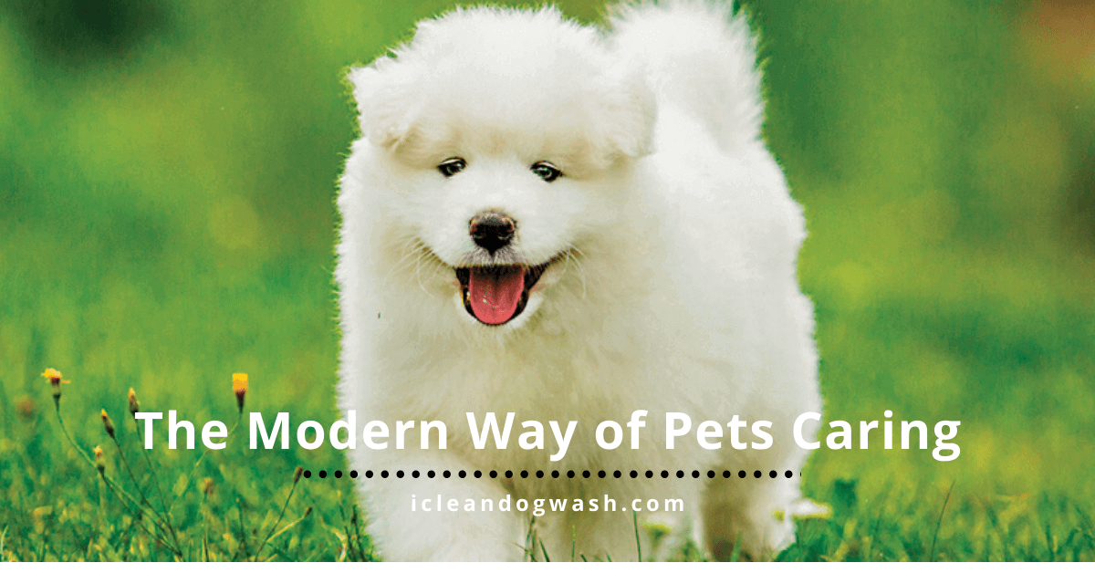The Modern Way of Pets Caring||The Modern Way of Pets Caring