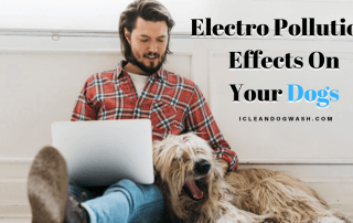 Electro-Pollution Effects On Dogs