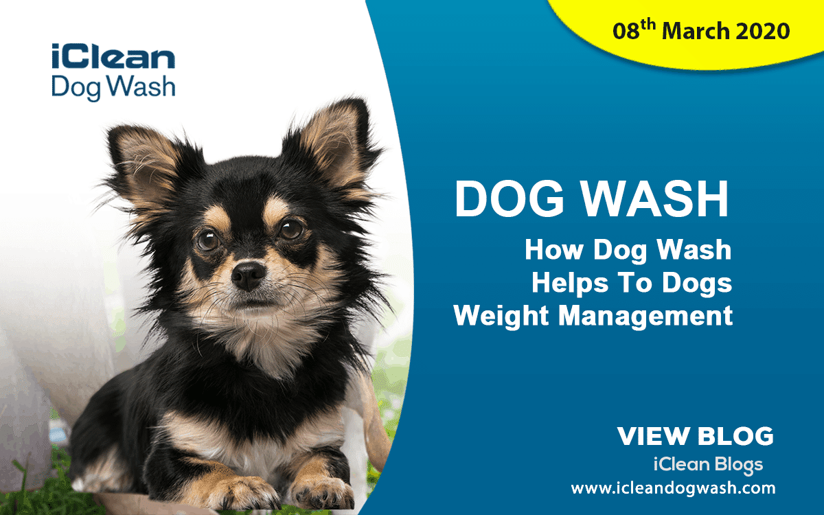 How Dog Wash Helps To Dogs Weight Management||Over Weight Dog||Weight Management