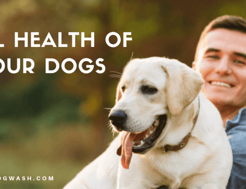 Oral Health of Your Dogs