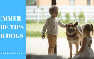 Dogs Summer Care