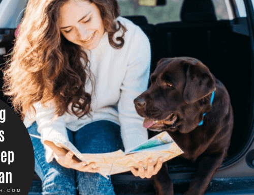 Traveling with Pets – How To Keep Them Clean