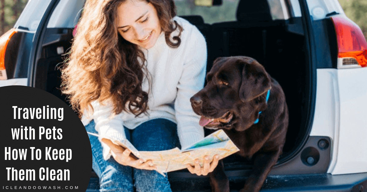Traveling with Pets||Pet Travel