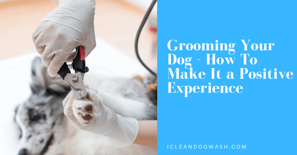 Dog Grooming||Dog Grooming near me