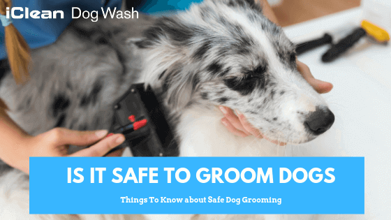 Dog grooming||Puppy grooming