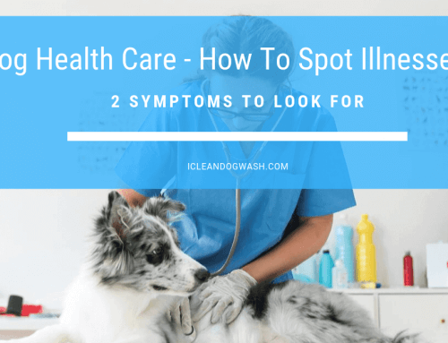 Dog Health Care – How to Spot Illnesses – 2 Symptoms to Look For