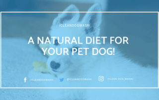 Natural Diet for your Pet