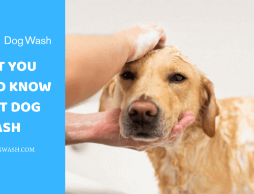 What you should know about Dog Wash