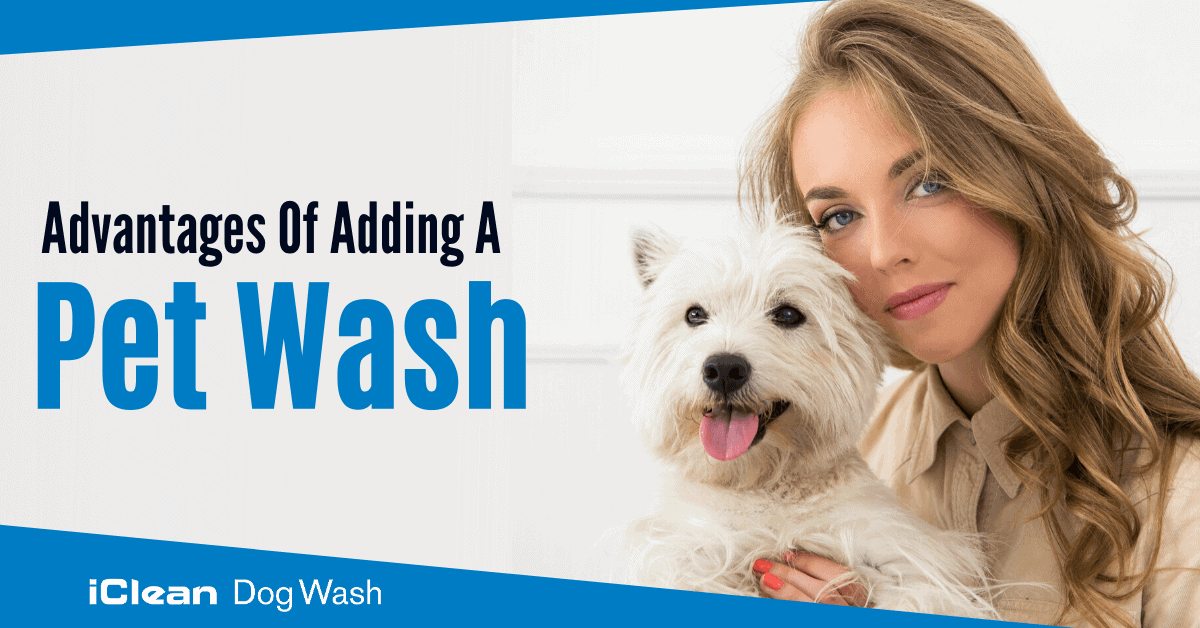 Advantages of Adding a Pet Wash||Advantages of Adding a Pet Wash