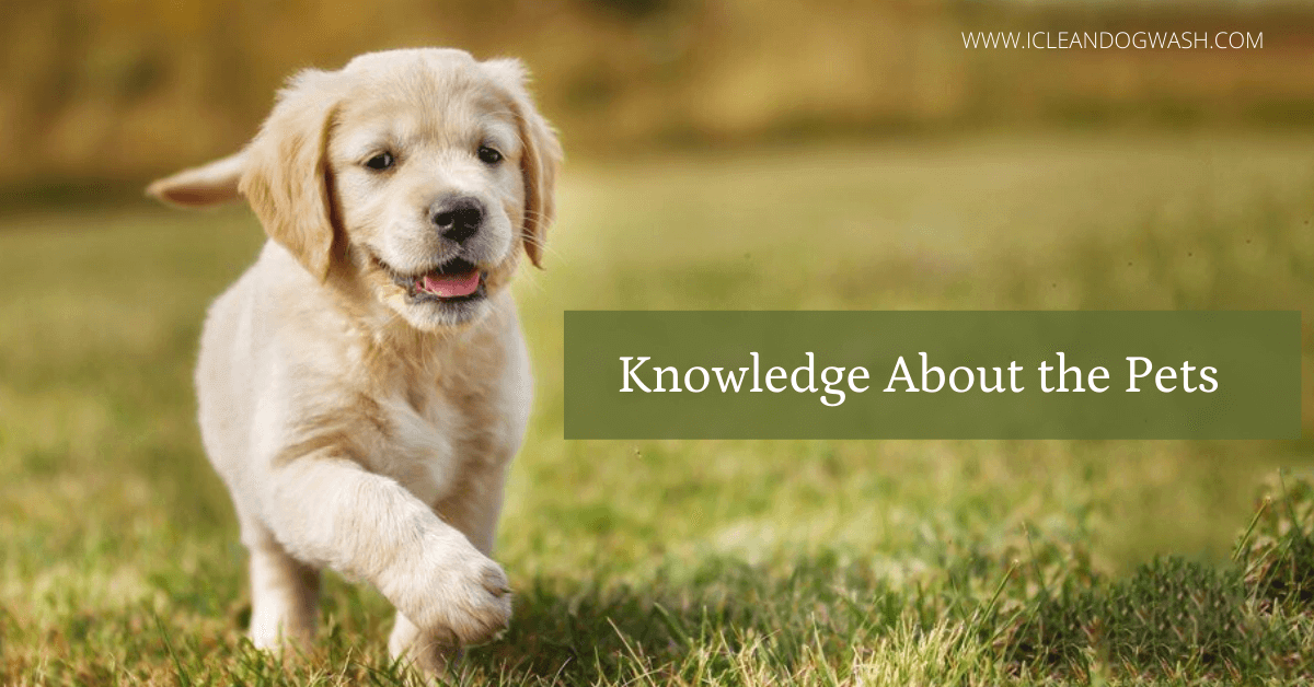 Knowledge About the Pets