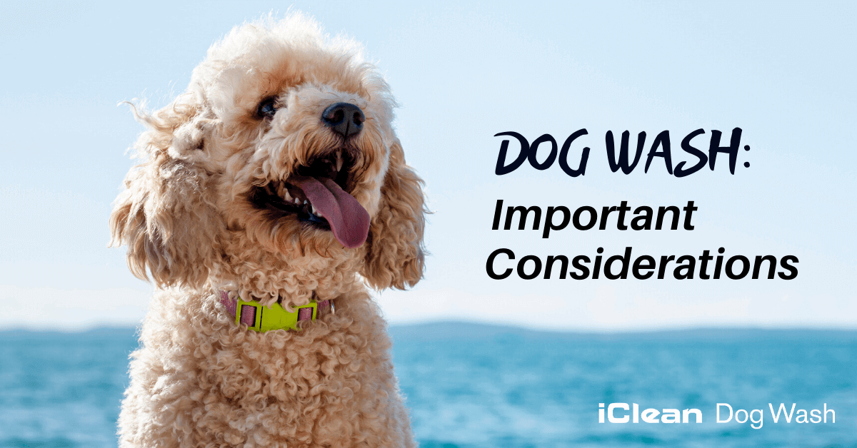 Dog Wash: Important Considerations||dog wash depends on many things. Here are some of them