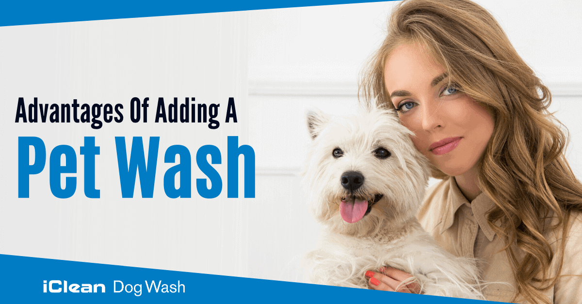 Treat Heat Exhaustion In Dogs- dog wash