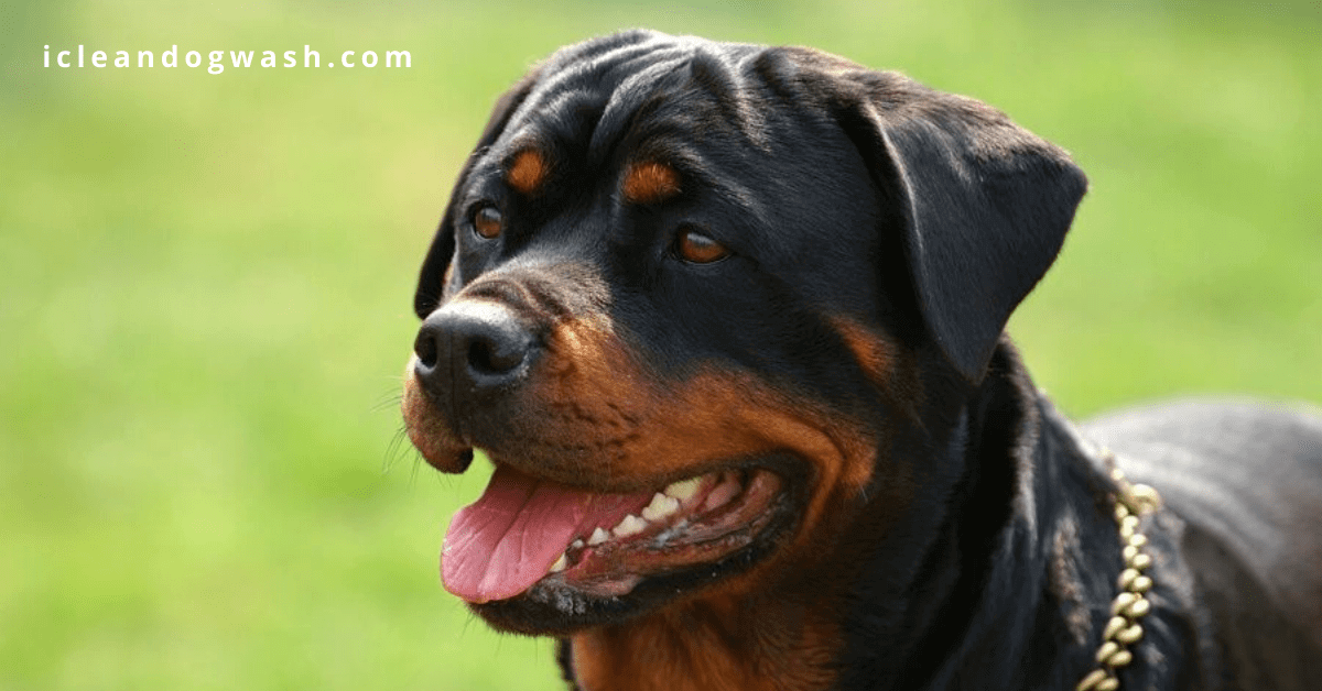 Safety tips for large breed owners
