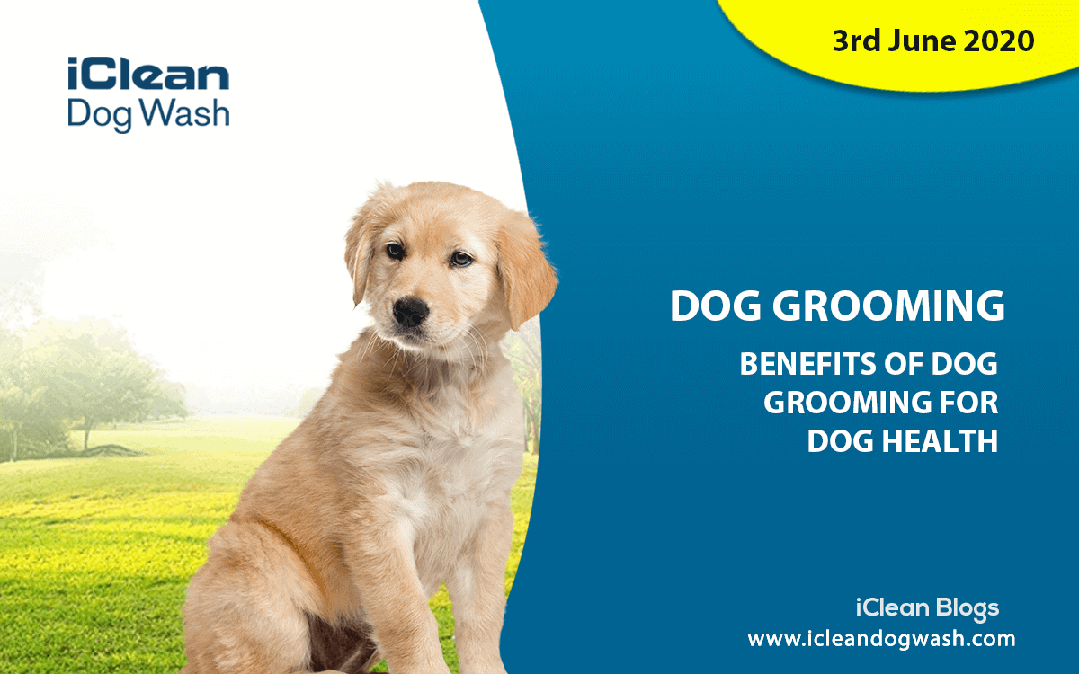 Benefit of Dog Grooming||||Reduced chance of ear infections||Benefits of Grooming Your Dog