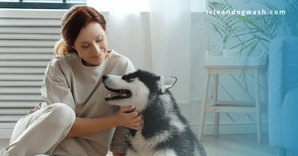 How to Keep Your Dog Healthy and Happy During COVID-19?