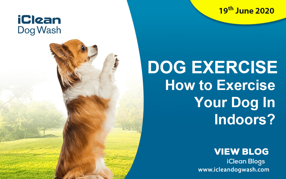 How to Exercise Your Dog Indoors?