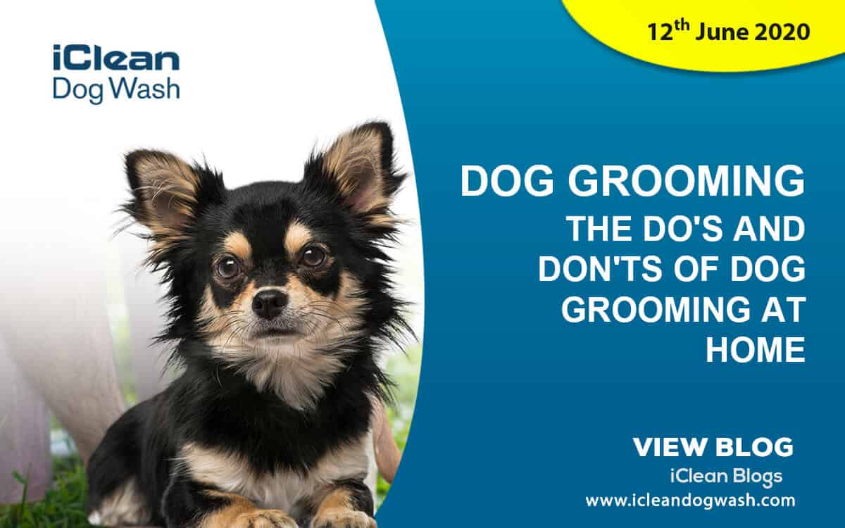 The Do's and Don'ts of Dog Grooming at Home