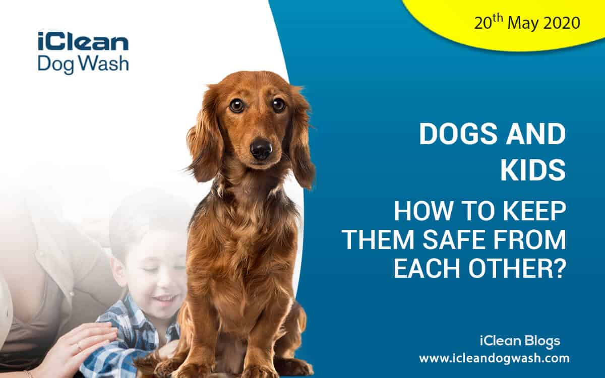 ||Dogs and Kids:||Dogs and Kids: How to keep them safe from each other? Kids can be annoying