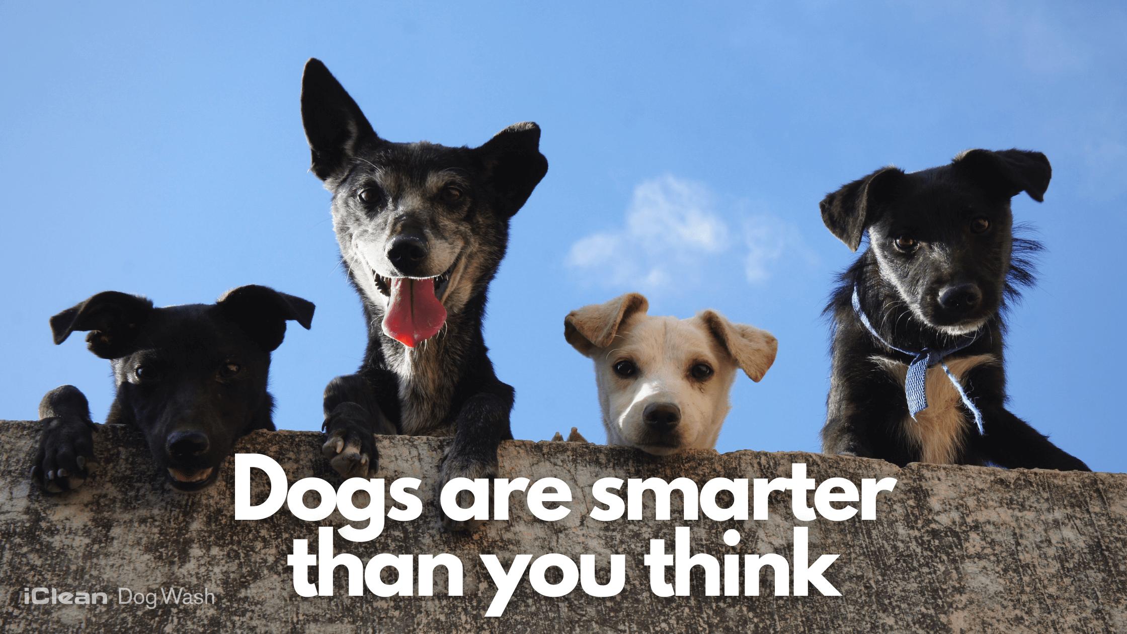 Dogs are smarter than you think
