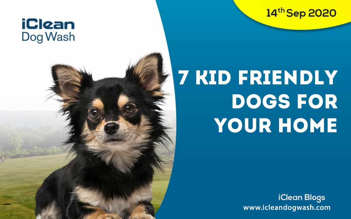 7 kid friendly dogs for your home