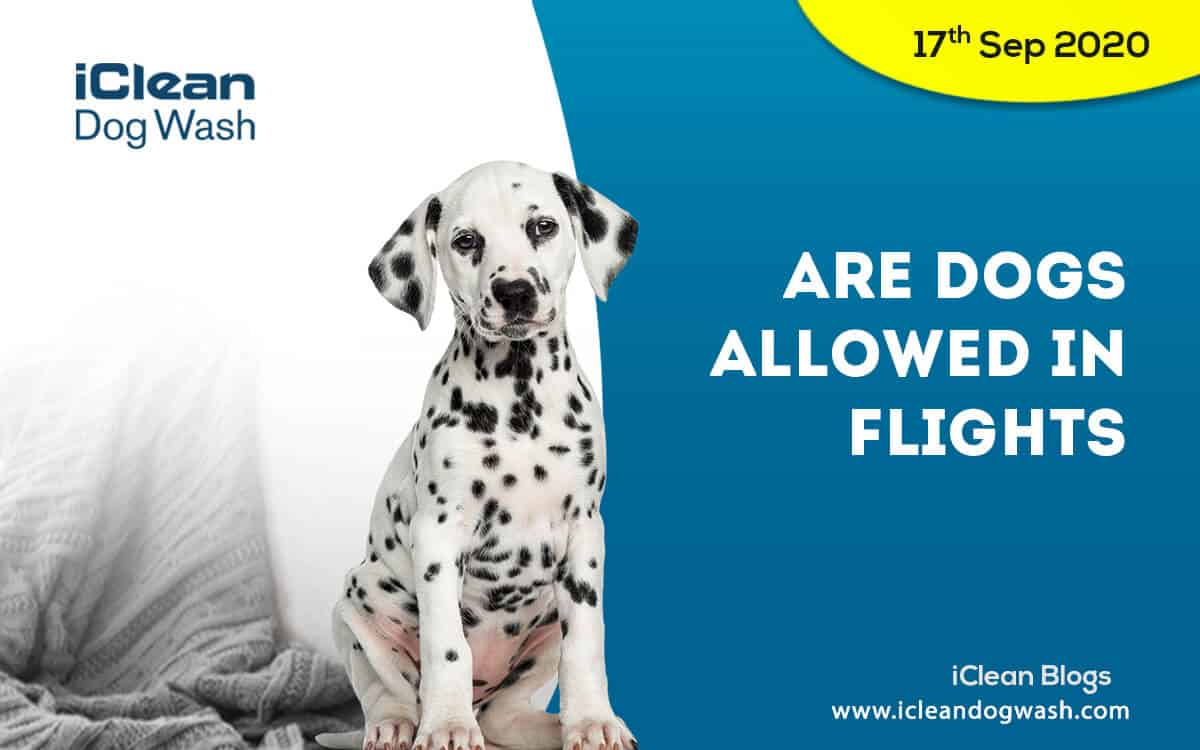 Are dogs allowed in flights