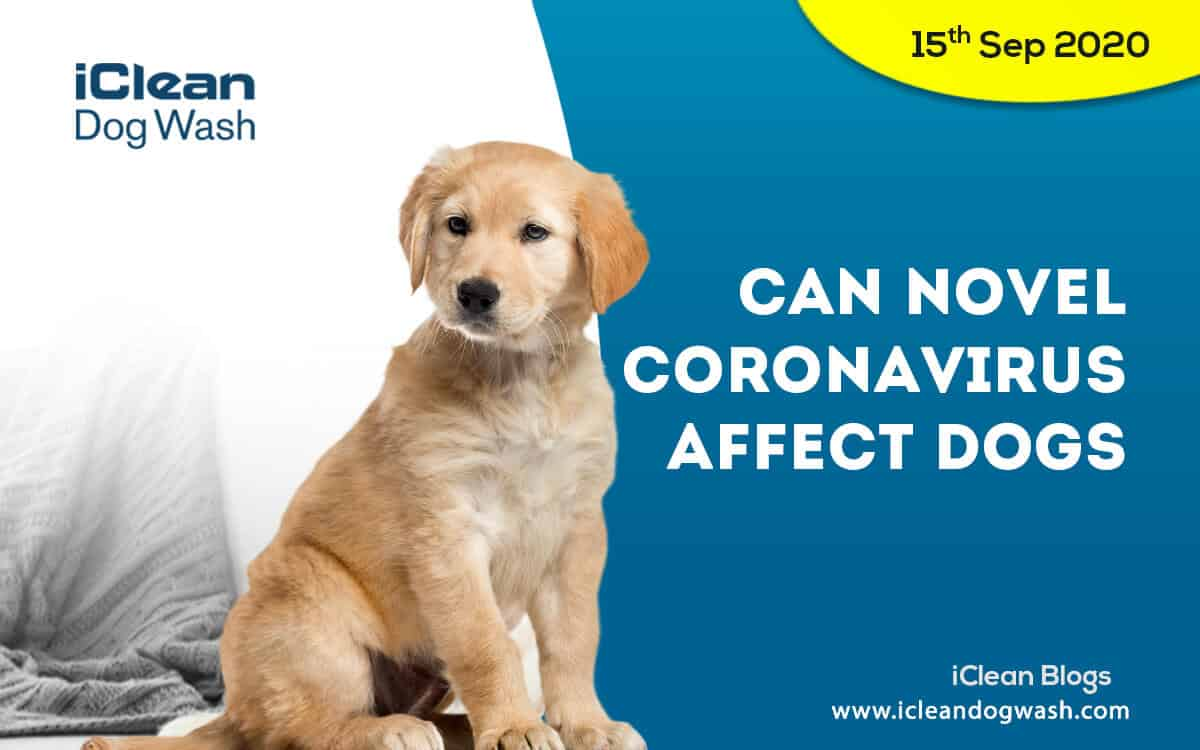Can novel coronavirus affect dogs