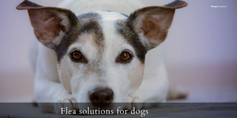How to tackle fleas on your dogs and at home?